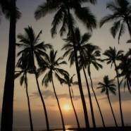 ハワイ島BIG-JINギャラリー:ハワイと言えば...