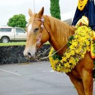 ハワイ島メリー・モナーク・パレードの舞台裏