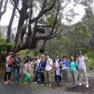 ハワイ島ツアー『ザ・朝火山ツアー』リポート 7月15日