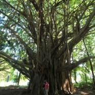 ハワイ島観光ツアー『ザ・朝火山ツアー』リポート 12月7日
