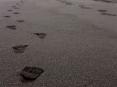 beach_fps
