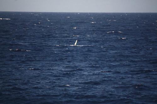 海の真ん中に見えるのは、クジラです!