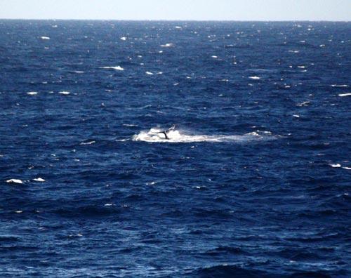 クジラの尻尾?!