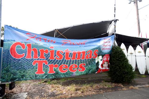クリスマスツリーの横にサーフボードが。なんともハワイらしい写真です。