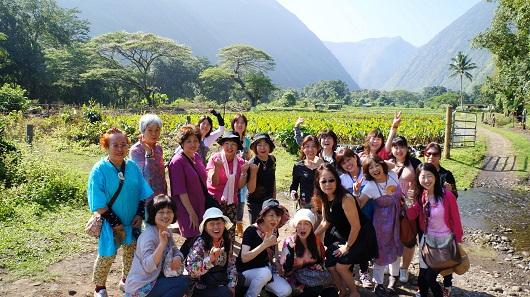 ハワイアンの聖地 ワイピオ渓谷とヒイラヴェの滝巡り(ハワイ島マイカイオハナツアー)