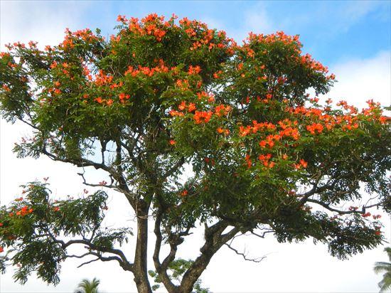 ハワイ島観光ツアー『キラウエア・アドベンチャー』リポート 12月11日(ハワイ島マイカイオハナツアー)004