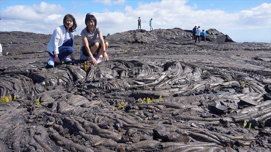 ハワイ島観光ツアー『モーニング・キラウエア』リポート 12月11日(ハワイ島マイカイオハナツアー)006