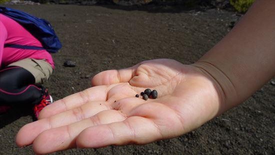 ハワイ島観光ツアー『ザ・朝火山ツアー』リポート 12月22日(ハワイ島マイカイオハナツアー)006