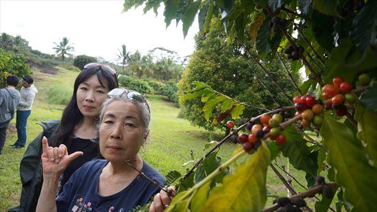 ハワイ島観光ツアー『ザ・朝火山ツアー』リポート 12月15日(ハワイ島マイカイオハナツアー)012